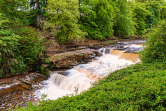 Aysgarth Lower Waterfall Royalty Free Stock Images