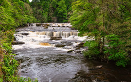 Aysgarth Upper Falls Royalty Free Stock Images