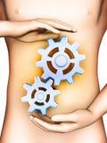 Ayuda de la digestión Fotos de archivo libres de regalías