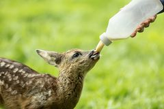 Ayuda del animal salvaje imagen de archivo libre de regalías