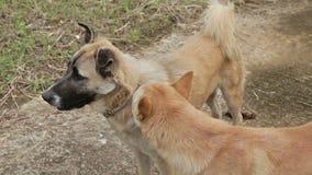 Ayuda del perro su amigo almacen de metraje de vídeo