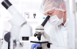 Ayudante de laboratorio en el laboratorio del valor nutritivo El análisis del cultivo celular a probar genético modificó la semil fotografía de archivo libre de regalías