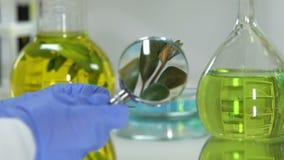 Ayudante de laboratorio que estudia la planta verde con la lupa, producto de belleza orgánico almacen de metraje de vídeo