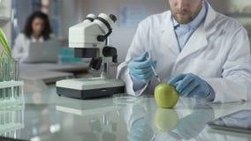 Ayudante de laboratorio que inyecta la manzana con la porción de pesticida para la condición comercial almacen de metraje de vídeo