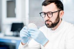 Ayudante de laboratorio que trabaja con las bacterias imagenes de archivo