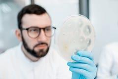 Ayudante de laboratorio que trabaja con las bacterias y los antibióticos imágenes de archivo libres de regalías