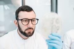Ayudante de laboratorio que trabaja con las bacterias y los antibióticos fotografía de archivo libre de regalías