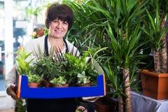 Ayudante de tienda que tiende las plantas verdes numerosas Fotos de archivo