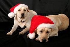 Ayudantes de Santa Foto de archivo libre de regalías