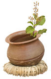 Ayurveda Holy Basil/tulasi in a clay pot. On a wicker ring royalty free stock photo