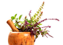 Ayurveda plants. Concept image of ayurveda showing different types of medical plants royalty free stock photo