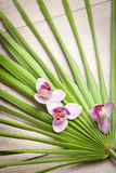 Ayurveda symbols for relaxation and inner beauty Stock Images