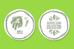 Ayurvedic草本-与Amla的产品标签 免版税库存图片