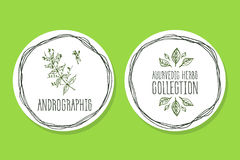 Ayurvedic草本-与Andrographis的产品标签 免版税库存照片