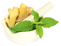 Ayurvedic combination of holy basil and ginger Stock Photos