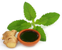 Ayurvedic combination of holy basil and ginger Stock Photography