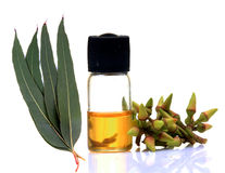 Ayurvedic eucalyptus oil. Eucalyptus oil bottle with flowers and leaves on white background royalty free stock image