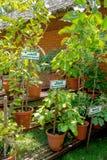 Ayurvedic herb garden stock photo