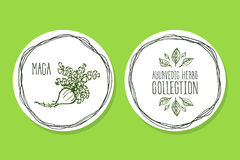 Ayurvedic Herb - Product Label with Maca Royalty Free Stock Photography