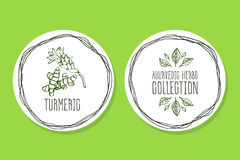 Ayurvedic Herb - Product Label with Turmeric Royalty Free Stock Photos