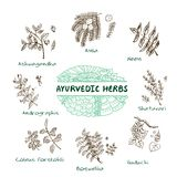 Ayurvedic herbs collection Stock Images