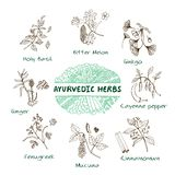 Ayurvedic herbs collection. Handdrawn Set - Health and Nature. Collection of Ayurvedic Herbs. Natural Supplements Royalty Free Stock Photos
