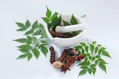Ayurvedic Herbs with Mortar and Pestle Royalty Free Stock Photos