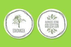 Ayurvedic-Kraut - Produkt-Aufkleber mit Echinacea Stockfotos