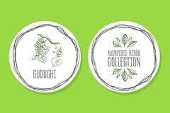 Ayurvedic-Kraut - Produkt-Aufkleber mit Guduchi Stockfotos