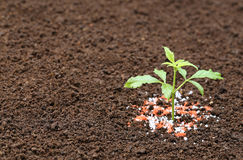 Ayurvedic Nishinda plant with chemical fertilizer Royalty Free Stock Photo