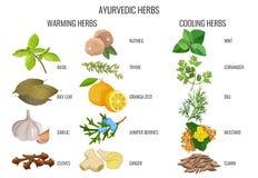 Ayurvedic warming and cooling herbs banner royalty free illustration