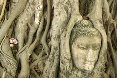 ayuthaya印度榕树buddhas顶头结构树 库存照片