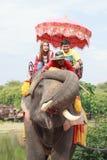 AYUTHAYA ΤΑΪΛΑΝΔΗ 6 ΣΕΠΤΕΜΒΡΊΟΥ: τουρίστας που οδηγά στην πλάτη ελεφάντων Στοκ Φωτογραφίες
