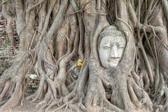 Ayuthaya Buddha head stock image