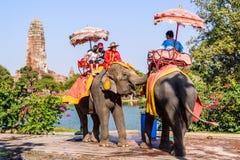AYUTHAYA TAILÂNDIA 2 DE JANEIRO: equitação do turista no pa da parte traseira do elefante fotos de stock