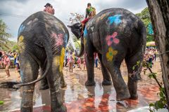 Elephant and peoples are splashing water in Songkran festival stock images