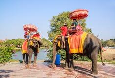 AYUTHAYA THAILAND-JANUARY 2: turist- ridning på elefantbaksidaPA Arkivbild