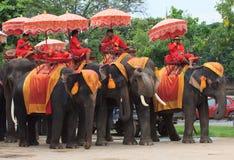 AYUTHAYA THAILAND-SEPTEMBER 6: elefantmahout som kopplar av på elep Arkivbilder