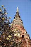 ayutthaya老被破坏的寺庙泰国 免版税图库摄影