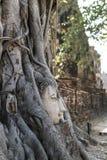 Ayutthaya Βούδας Στοκ φωτογραφία με δικαίωμα ελεύθερης χρήσης