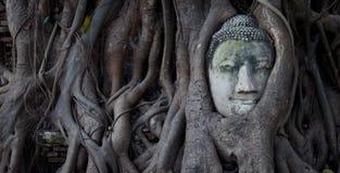 Ayutthaya Будда стоковые фотографии rf