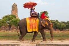 AYUTTHAYA - 14-ОЕ ДЕКАБРЯ 2014: Слон идет на сценарный ro Стоковые Фото