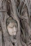 Ayutthaya Immagini Stock Libere da Diritti