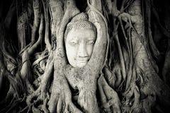 Ayutthaya Royaltyfria Bilder