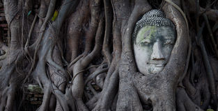 Ayutthaya Buddha Royalty Free Stock Photos