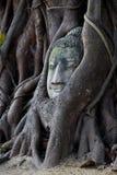 Ayutthaya Buddha Stock Images