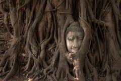 ayutthaya buddha Arkivfoton