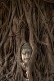 ayutthaya buddha Royaltyfri Foto