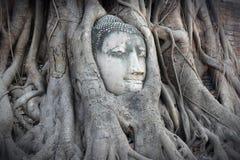 Ayutthaya Buddha head Stock Images