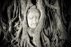 Ayutthaya Royalty Free Stock Images